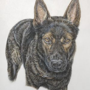 """Kody"" - 14 x 16"" Original colored pencil - Private commission"