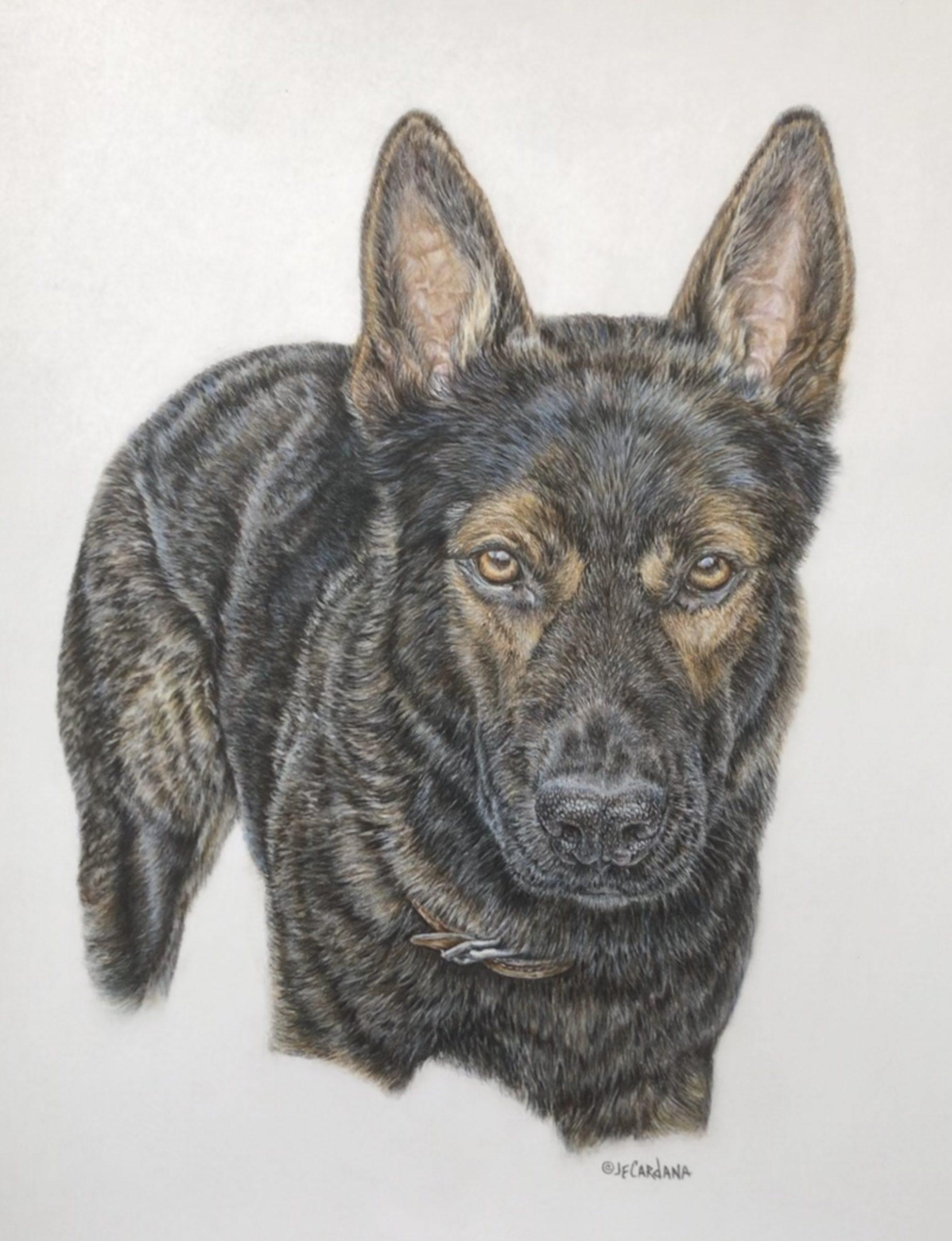 """""""Kody"""" - 14 x 16"""" Original colored pencil - Private commission"""