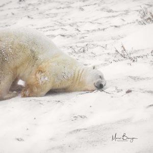 Polar Delight