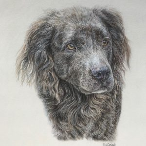 """Stoli"" 12 x 14"" original colored pencil - private commission"