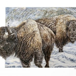 """""""Winter Sentinels"""" 18 x 24"""" Original colored pencil ; also available signed limited edition giclee prints"""