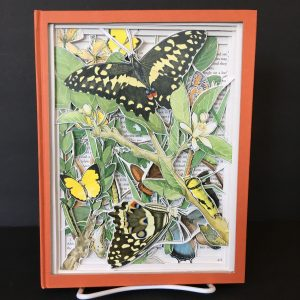 Southern African Butterflies Book Carving