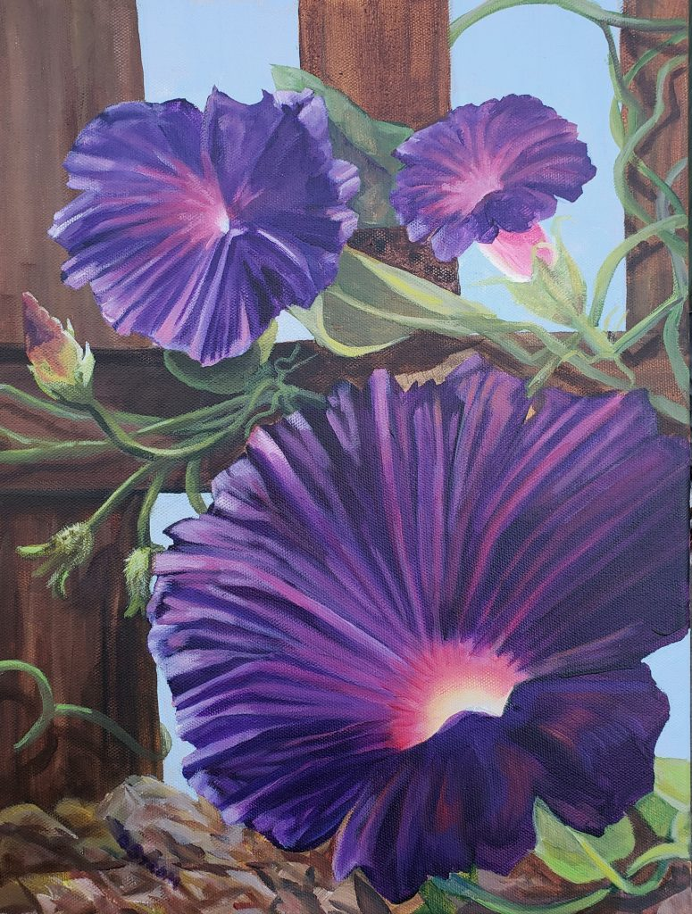 Acrylic painting of purple morning glory flowers with brown picket fence on the background. Artist: Diana Strom.