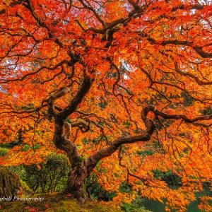 An Explosion of Color