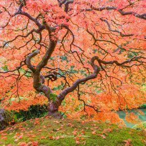 Autumn's Crown Jewel