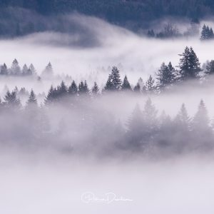 Just Breathe - Oregon
