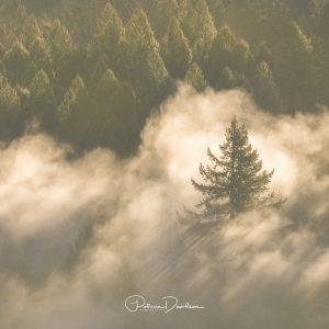 Lone Tree & Fog - Oregon